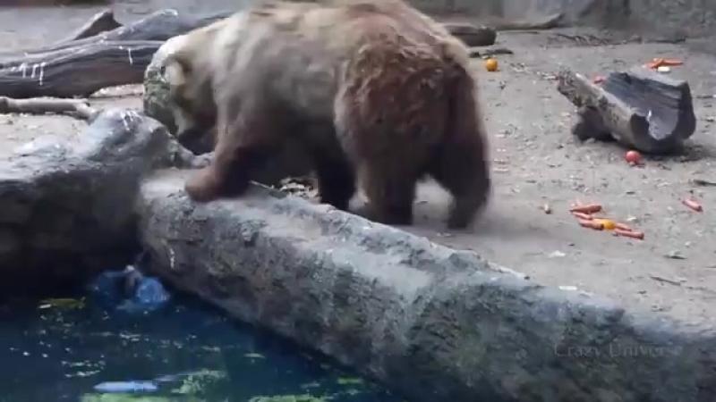 Животные помогают друг другу