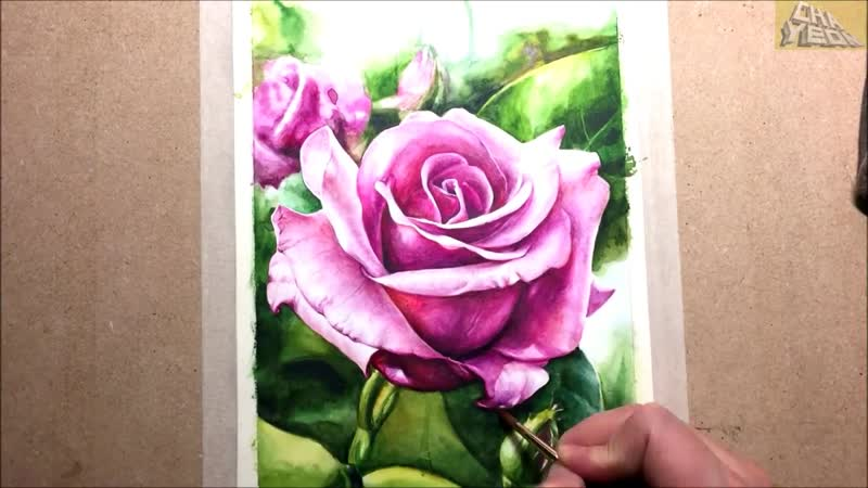 Watercolor painting of Pink rose _ 꽃 그리기 , 장미 수채화 그림(1)