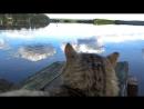 Утя мешает нам с котом рыбачить