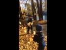 Video-c440036f5a224281c9b47d17dadfe046-V.mp4