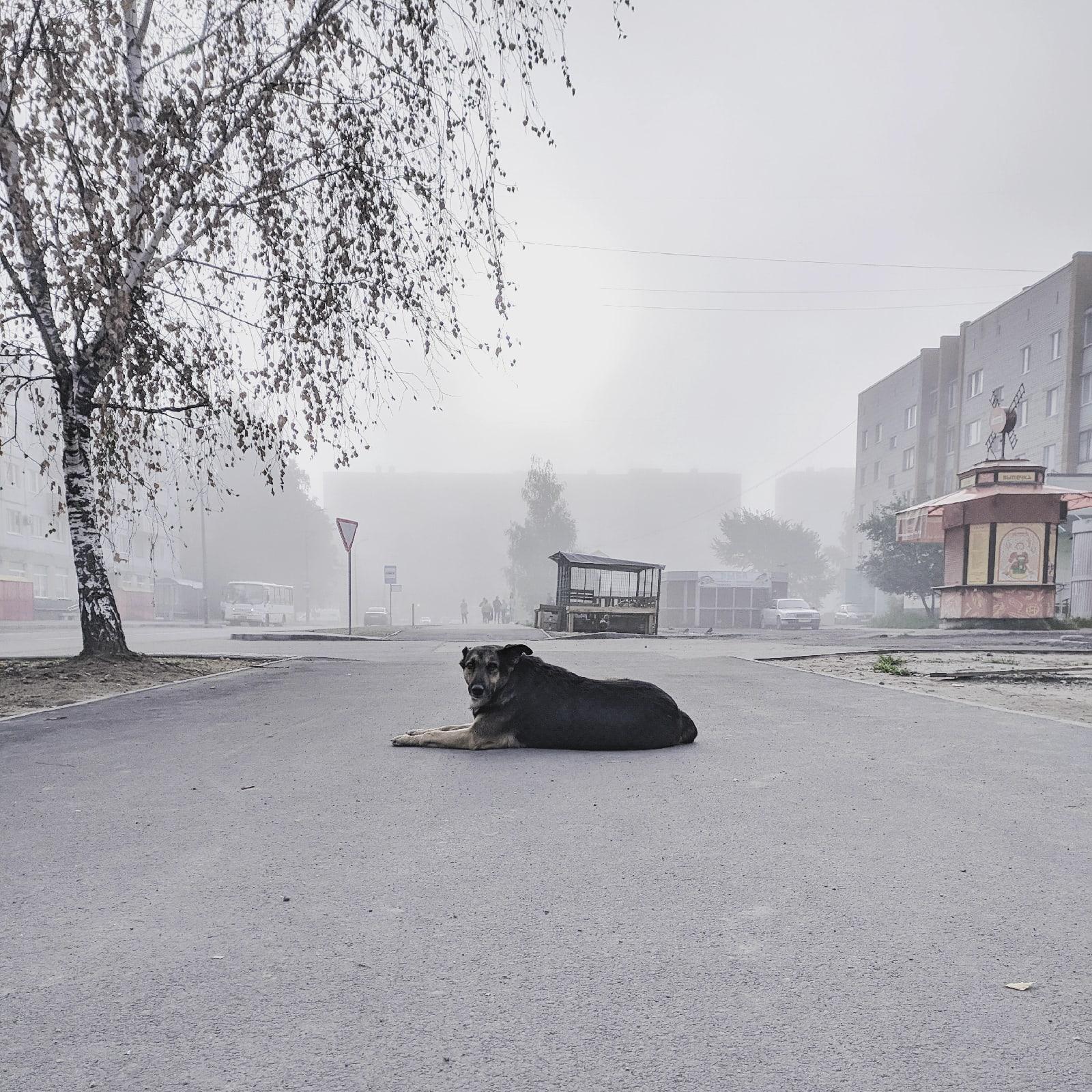 Псковская туманная собака-ебеняка