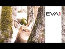 AU-EVA1 Shooting Wildlife in Winter by Luca Verducci | Panasonic