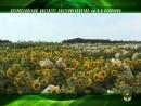 Всесоюзный Институт Растениеводства им Вавилова