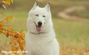 Собака - существо, которое облаивает вошедшего гостя, тогда как человек - гостя ушедшего.(