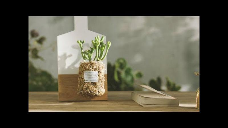 《焰火花园》27 室内设计美学,一件小小的植物装饰,改善你家的装修风26