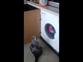 Бася стирает