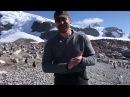 David Harbour dancing with penguins in Antarctica