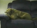 Собака-уебака xDD