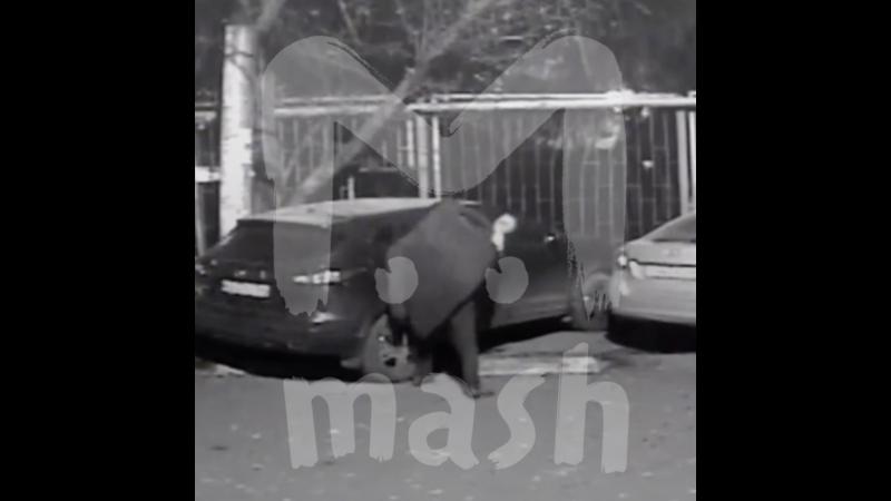 Ночью в Саратове пьяный мужик разбил камнем стекла автомобиля во дворе