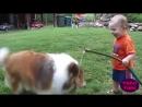Дети и животные. Прикольное видео про детей и животных