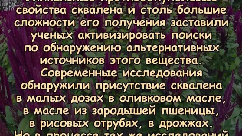 АМАРАНТ - хлеб жизни, запрещённый Петром I