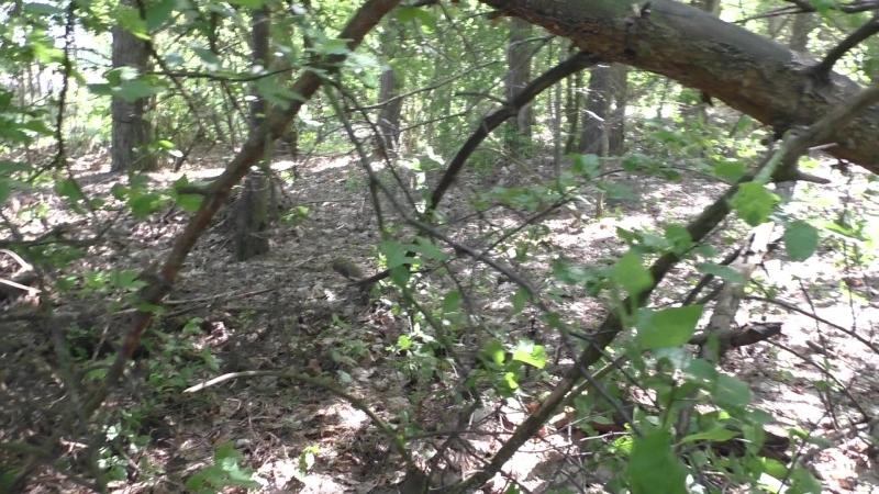 Сморгонь Лес 8 Дискордия Первая траншея по сев краю леса Часть 5