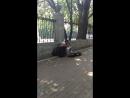 Уличный музыкант в Мариинском парке