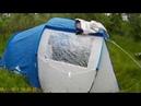 Обзор палатки QUECHUA Arpenaz Family 4