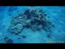 Дайвинг в Красном море (часть 2)