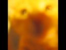 50 оттенков Солнышка