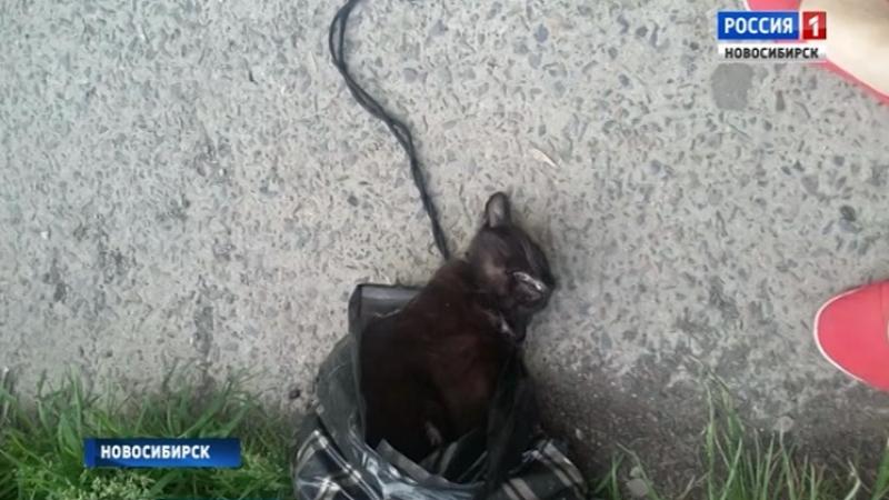 Из пакета торчало ухо новосибирца обвиняют в зверском убийстве кота