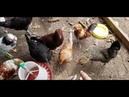 Домик для цыплят. Делаю дела по хозяйству.