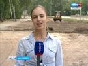 В Красноярске появится новая рекреационная зона Гремячая грива