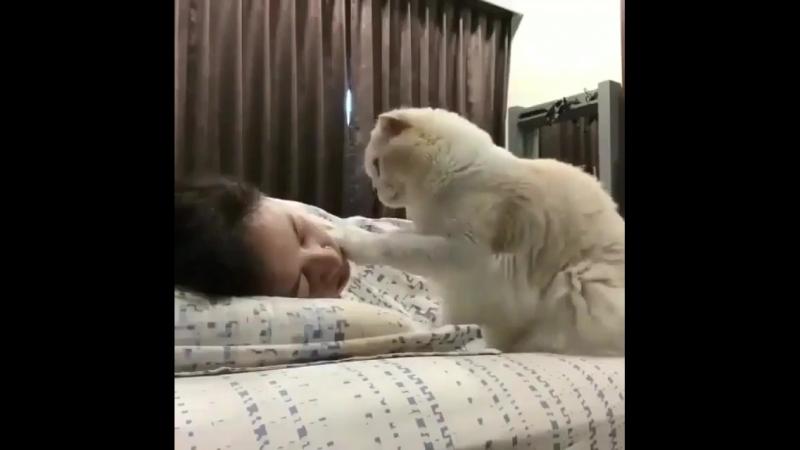 Хозяйка, пора бы и позавтракать!