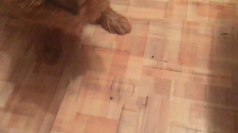 Охота за мёртвой мухой :DD