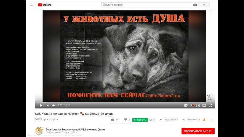 Приказано уничтожить видеоотчёт со стройки 6 октября🐾 БФ Лохматая Душа