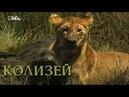 Nat Geo Wild: Африка: Убийцы с фантазией.Колизей (1080р)