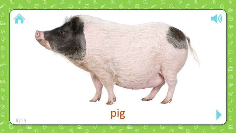 Pig - Pets and Farm Animals - Flashcards for Kids