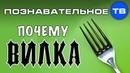Почему она ВИЛКА Познавательное ТВ Артём Войтенков