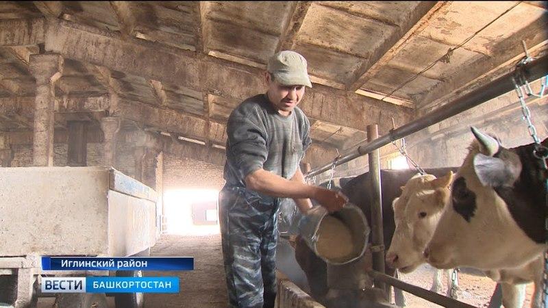 Минсельхоз Башкирии разрабатывает программу по развитию мясного скотоводства