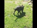 Стаф 😍 как большая Кошка 😘💞💕