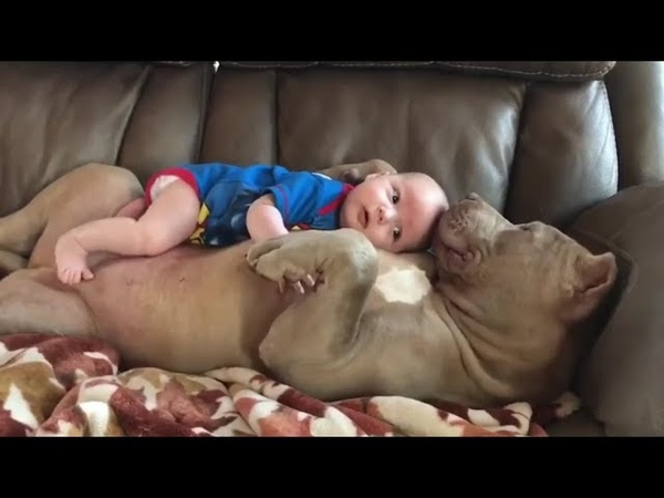 Cute Dog Babysitting Dog Love Baby - Funny Dogs