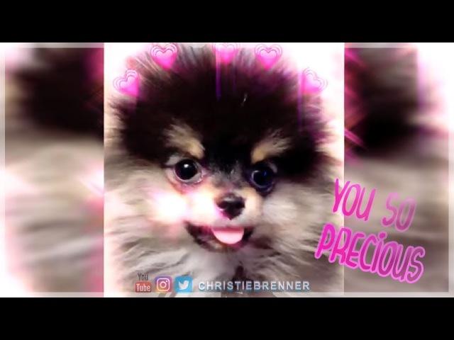 Yeontan you so f precious when you bark