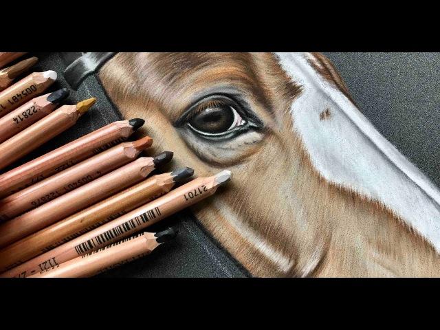 Pastellzeichnung von Karen Bauer Artworks | Timelapse horse in pastels
