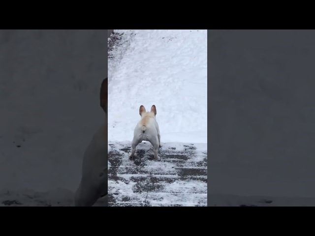 Little Dog Convinces His Friend to Come Back Inside From the Snow