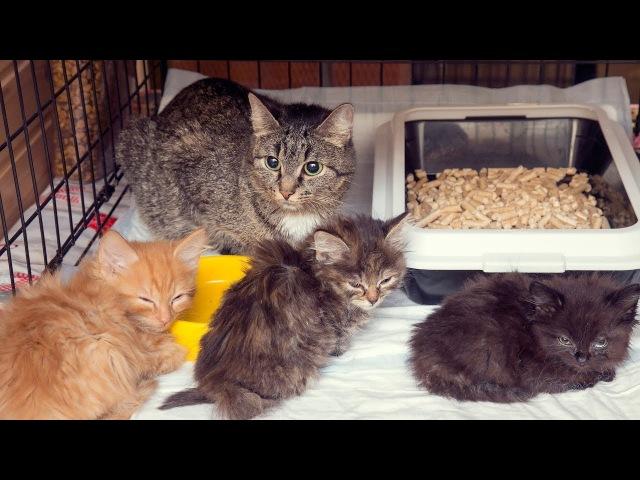 Найденные замерзшие и уставшие от скитаний котята ищут дом Новосибирск homeless kittens