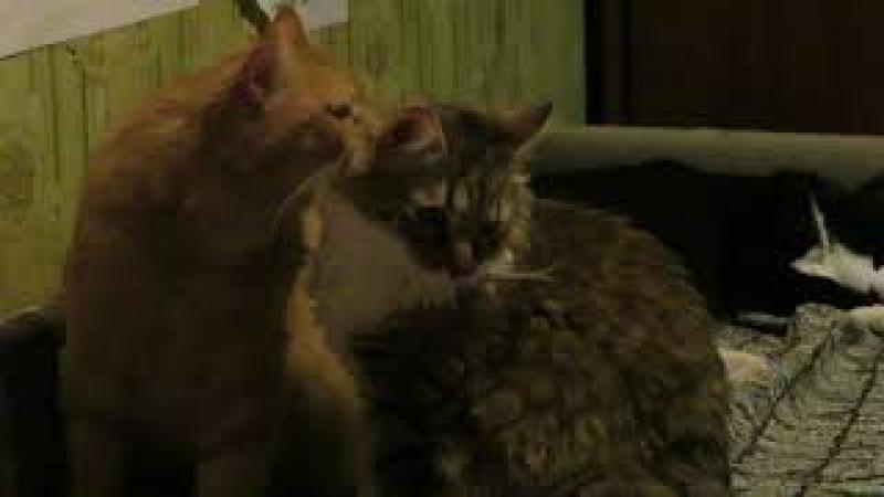 Братец Тиша и сестрёнка Мыша (умывашки)