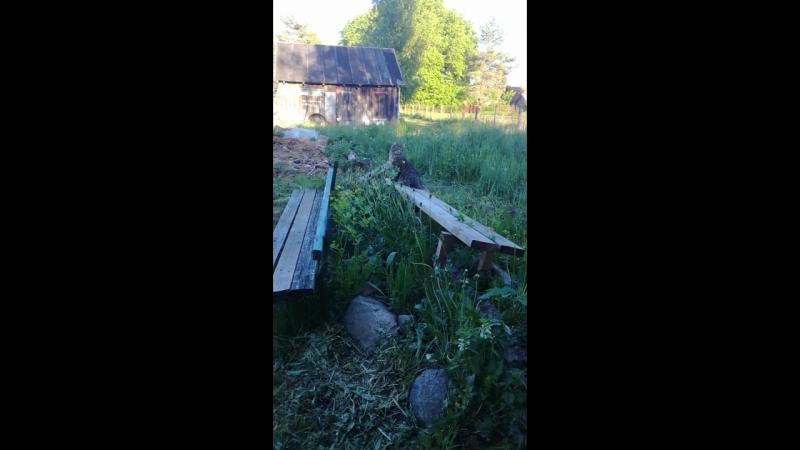 Батон наблюдает за птичками