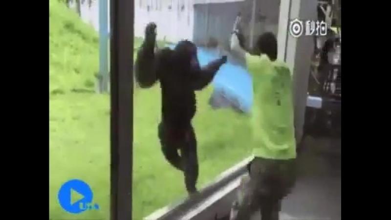 ДОБРОГО УТРА! ))Самые смешные приколы про обезьян