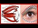 ВЕРНЁТЕ ЗРЕНИЕ вернув эластичность МЫШЦАМ ГЛАЗ точечный массаж и упражнения для глаз