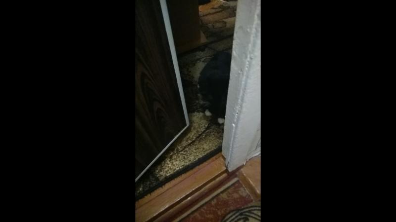 меня не было 4 дня. верный кот Васька боится, что я опять ушла.
