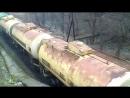 Украинский лес едет в Европу