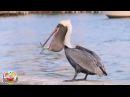 Птицы. Развивающее видео для детей по методике Домана. HD качество.