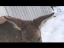 Милые и смешные животные 720p mp4