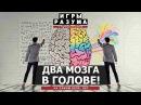 Расщеплённый мозг это нормально Андрей Курпатов на QWERTY