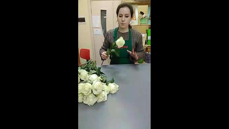 Сборка букета 25 белых роз Эквадор 60см