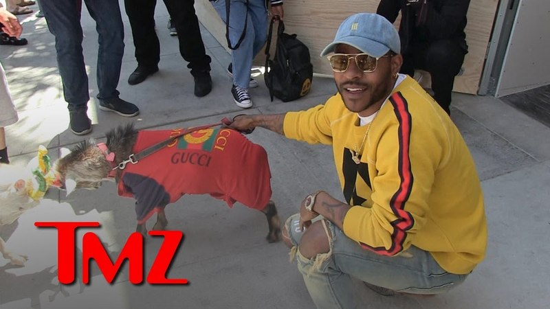 Eric Bellinger's Pet Goats Butt Heads While Wearing Gucci | TMZ