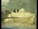 16-Милые крыски из зоомагазина!
