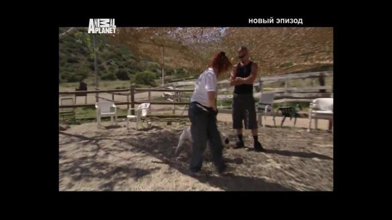 Д/С На свободу с питбулем 15 серия (2010г)