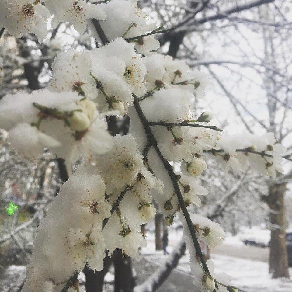 Снегопад в Республике Крым в ночь на 22 марта 2018